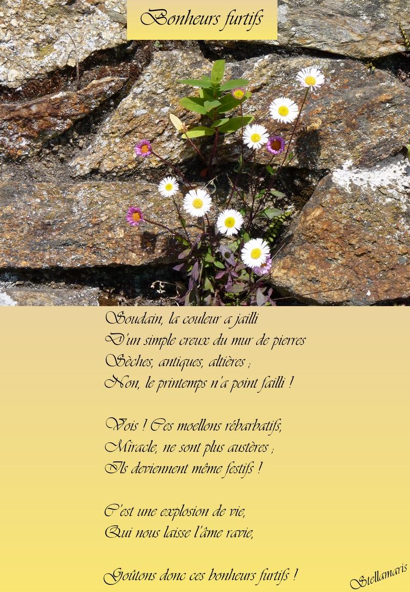 Bonheurs furtifs / / Soudain, la couleur a jailli / D'un simple creux du mur de pierres / Sèches, antiques, altières ; / Non, le printemps n'a point failli ! / / Vois ! Ces moellons rébarbatifs, / Miracle, ne sont plus austères ; / Ils deviennent même festifs ! / / C'est une explosion de vie, / Qui nous laisse l'âme ravie, / / Goûtons donc ces bonheurs furtifs ! / / Stellamaris
