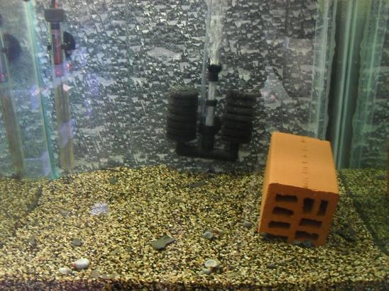 ma shrimproom et fishroom Sdc12037-1ce7e62