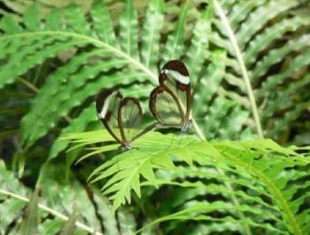 http://img42.xooimage.com/files/3/c/2/mariposas-transparentes-02-15b5e55.jpg