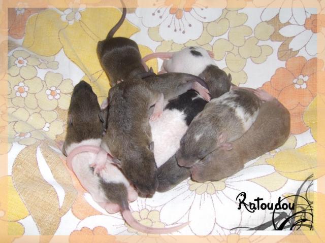 [25] Ma petite Lolita est maman ^^ Dscf5146-1019dee