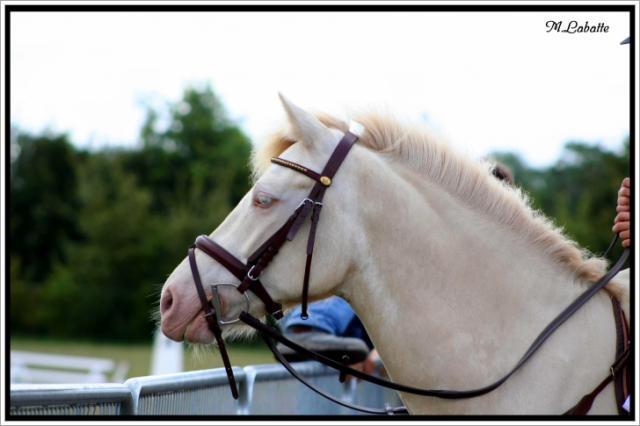 L'homme n'aura jamais la perfection du cheval. Chocolatblanc-10edb36