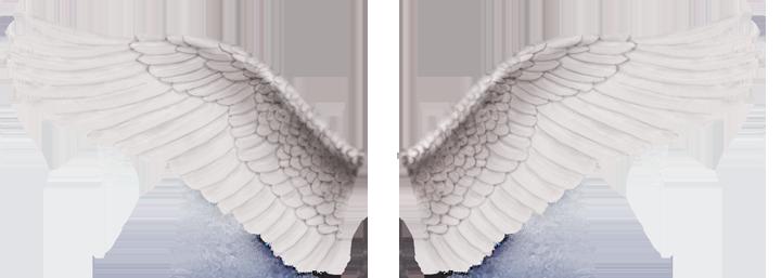 tubes ailes 79904079-1001c8c