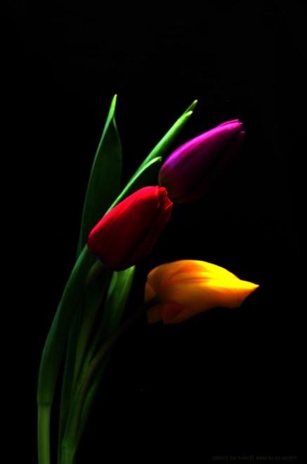 belles-fleurs-flora