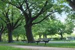 Dans la parc