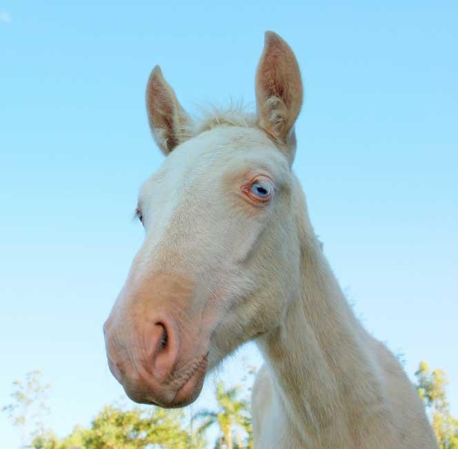 http://img42.xooimage.com/files/a/0/3/albinos-2-pe-16fffe9.jpg