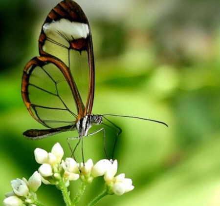 http://img42.xooimage.com/files/a/9/8/mariposas-transparentes-05-15b5e7d.jpg
