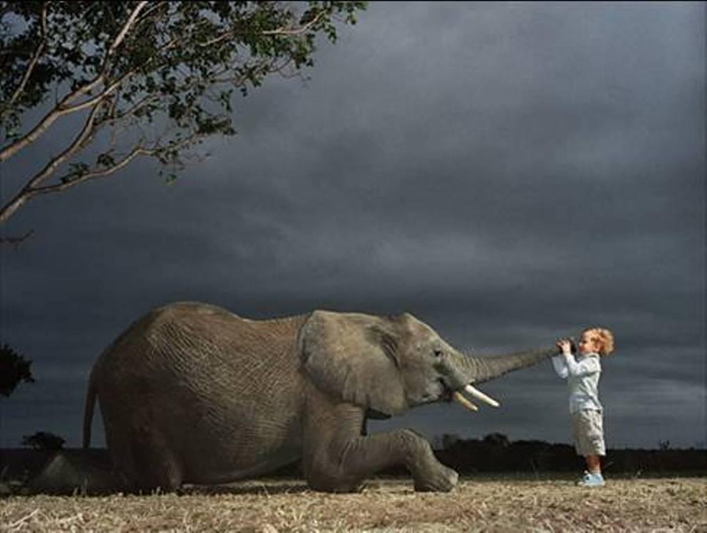 elephant-fond-d-ecran-enfant-flora