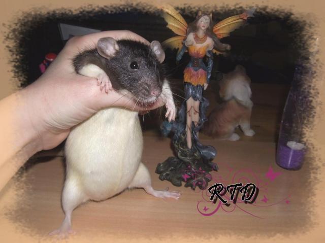Mlle Kenobi et Mr Blister, les bibous sont là :P Dscf0006-8d6dc3