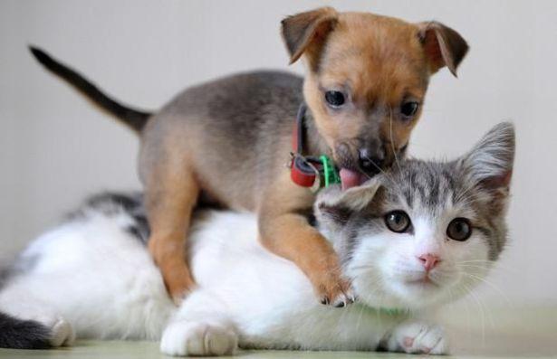 http://img42.xooimage.com/files/d/6/7/animals_192_31-16a4754.jpg