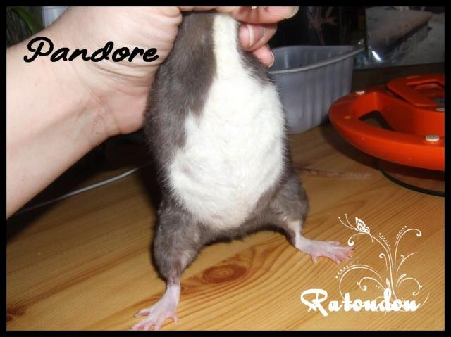 RTD Pandore xXx Spoutnik, les knakis sont nés! Dscf8005-133f563